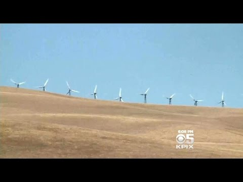 Environmentalists Worry About More Bird Deaths With Wind Turbines At Altamont Pass