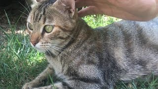 Funny cat, running away, scared cat, run and catch