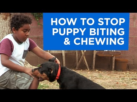 how-to-stop-puppy-biting-and-chewing