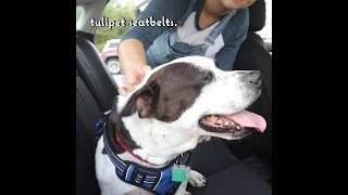 Tulipet Seatbelts Instagram Commercial