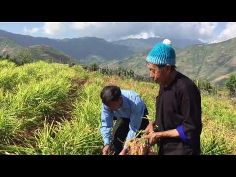 Dragon Vietnam - Ginger Farm