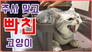 꼬미의 병원 방문기( 고양이 종합백신 보강접종) | 주…