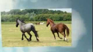 Nada Nada By Mango Punch The Horse Edit