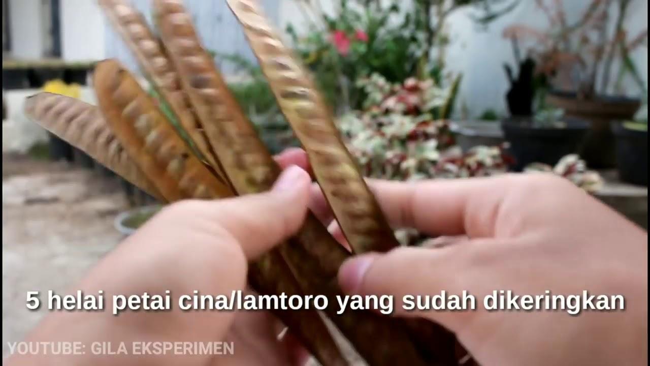 obat kuat herbal pria perkasa youtube