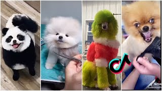 Dog grooming compilation