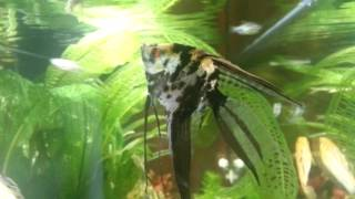 Juwel Primo 110 Led - planted tropical aquarium