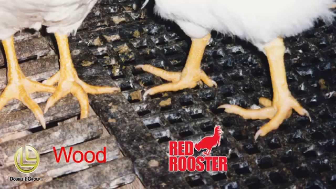 2 X 4 Poultry Plastic Flooring That Optimizes Bird