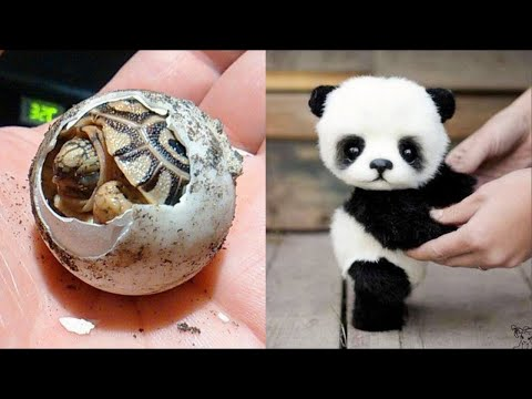Cute Baby Animals - Funny and Cute Moment of The Animals #2 (2019)