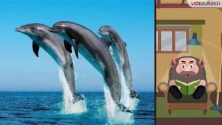 Кроссворд «В мире животных»