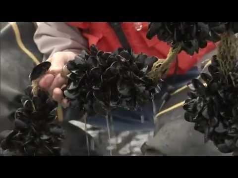 Exploring U.S. Aquaculture