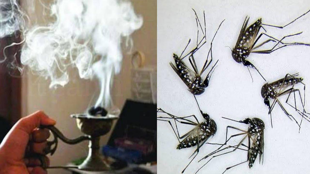 मच्छर भगाने का घरेलू उपाय, काटना तो दूर नजर नहीं आयेगा इसे जलाने के बाद // machar bhagane ka tarika