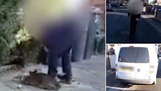 RSPCA Guy Shoots Baby Deer & Throws Body on Walkway~WARNING: Viewer Descresion Advised