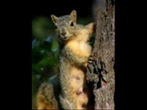 Cledus T Judd; Goodbye Squirrel