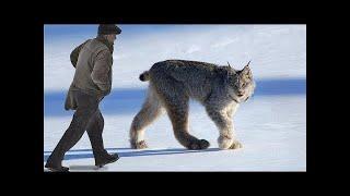 10 जंगली जानवर जिन्हे हम कभी भी पालतू नहीं बना सके WILD Animals We've NEVER Been Able To Domesticate