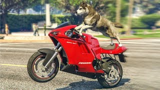 STUNTING AS A DOG IN GTA 5!? - (GTA 5 Stunts & Fails)