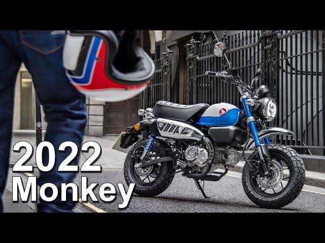 2022 Honda Monkey 125 Update   What's New?