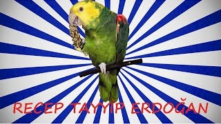 Papağan Ve Muhabbet Kuşu Recep Tayyİp ErdoĞan Konuşturma Sesi Hazır Ses Kaydı 1