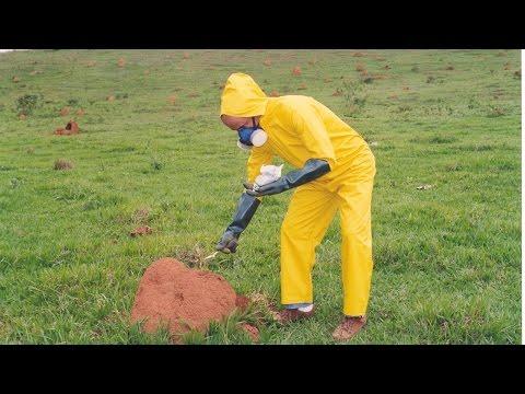 Curso Controle de Cupins em Áreas Agrícolas, Pastagens e Construções Rurais - Quem São os Cupins