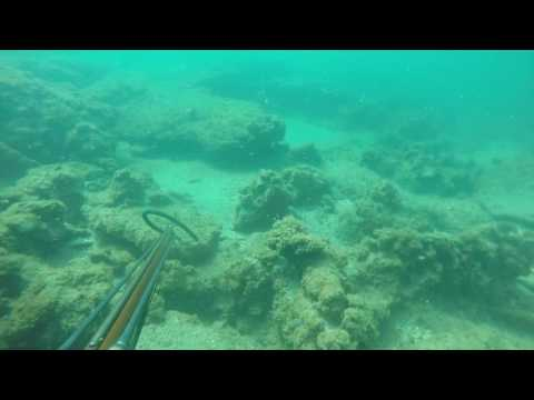 Scuba Dive in Stuart Florida 7/10/16