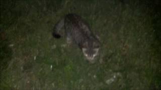Cats In The Dark / Коты в темноте