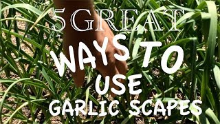 5 Great Ways to Use Garlic Scapes