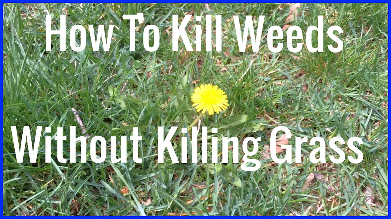 Weeds Without Killing Gr
