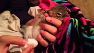 How to make a baby squirrel go to the bathroom