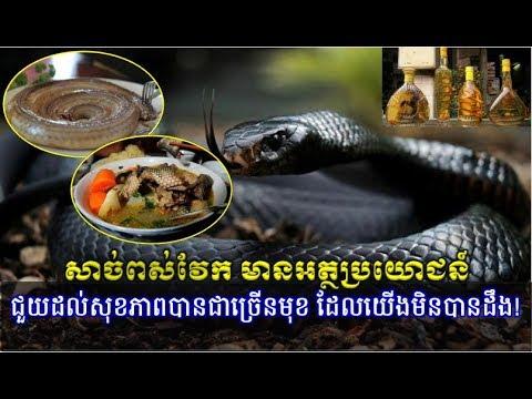 សាច់ពស់វែក មានអត្ថប្រយោជន៍ជួយសុខភាពបានជាច្រើនមុខ,Cambodia Hot News, Mr. SC