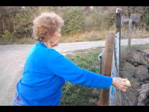 Great Grandma Effie - YouTube