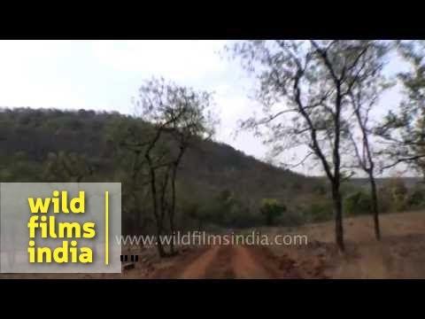 Inside the dense forest of Panna Tiger Reserve