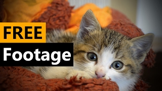 Kitten / Cat  - FREE Stock Video Footage [Download Full HD]