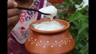 How to make thick curd at home - healthy village food