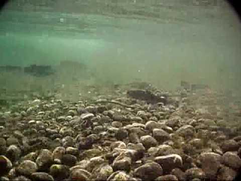 Sharon fishing rock creek lake the easy way youtube for Rock creek fishing
