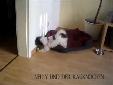 Puppy Dog - Bolonka Zwetna Nelly 4 Month