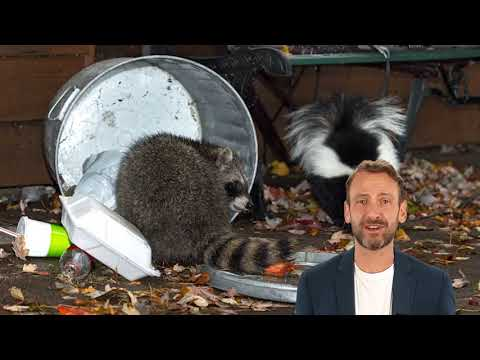 Animoval - Best Squirrel Removal in West Los Angeles