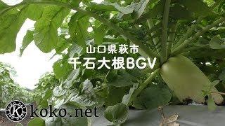 千石大根BGV (山口県萩市)