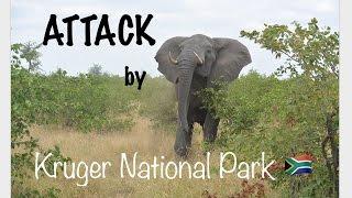 Elephant Attack -Kruger National Park - SOUTH AFRICA