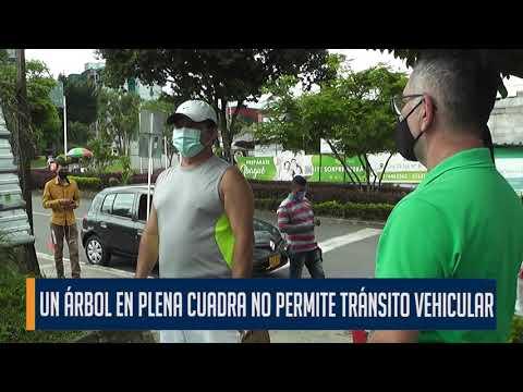 Un árbol en plena calle no permite el tránsito vehicular en el barrio Arkamónica