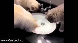 Котэ и кошки самые прикольные животные