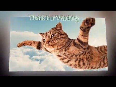 Keep Smiling - Top Funny Cat and Dog Dancing and Singing in the Word