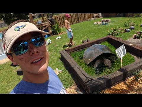 The Worlds LARGEST Tortoise Enclosure in My BACK YARD!!