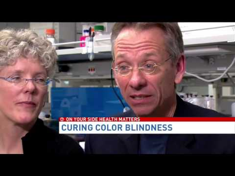 Colorblindness cure may have been found by genetic researchers
