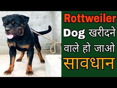 Rottweiler Dog खरीदने वाले हो जाओ सावधान / Dog Price list in India/Rottweiler Dog price in India