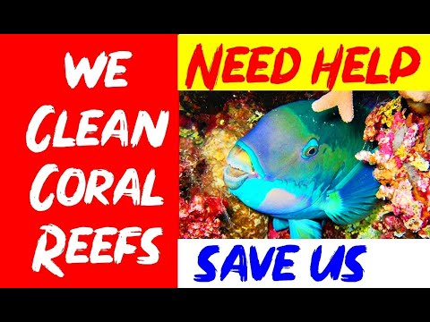 Parrot Fish Coral Reef Education Sri Lanka