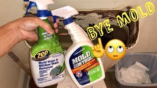 📒How to Get Rid of Black Mold or Mildew Stains Fast Mold Remediation Review & Mold Definition