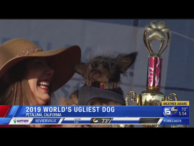Scamp the Tramp wins World\'s Ugliest Dog Contest