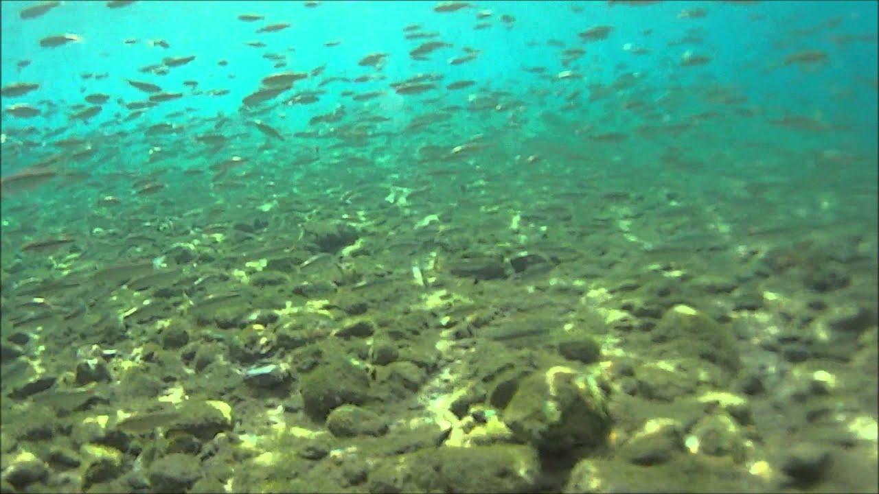 Underwater world of Ohrid Lake - YouTube