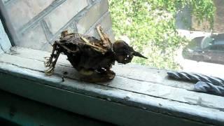 Находка в вентканале (Скелет голубя)