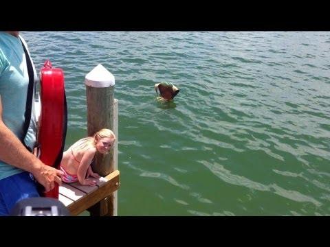 Mermaid sighting in the ocean visits humans by the dock
