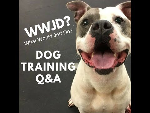 What Would Jeff Do? Dog Training Q&A #418 | Stop whining puppy | Dog distracted on walks